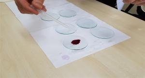 Soğan Kökü Hücrelerinde Miztoz Bölünme